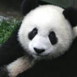serp-google-panda-gsite