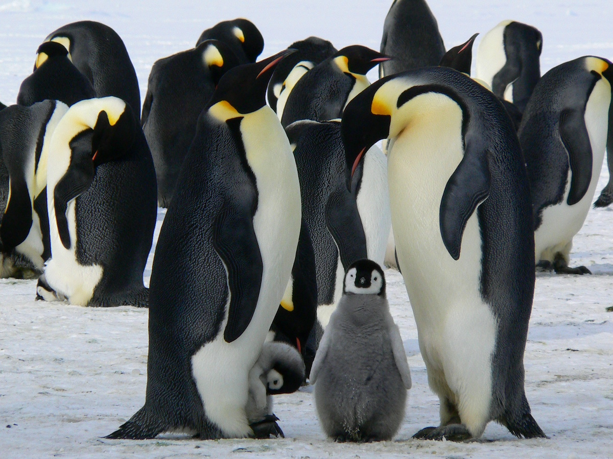 Google Penguin: aggiornamento in real time